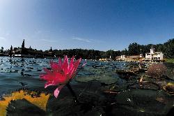 Tavirózsák között úszni termál vízben, egyedi élmény télen-nyáron. www.heviz.hu